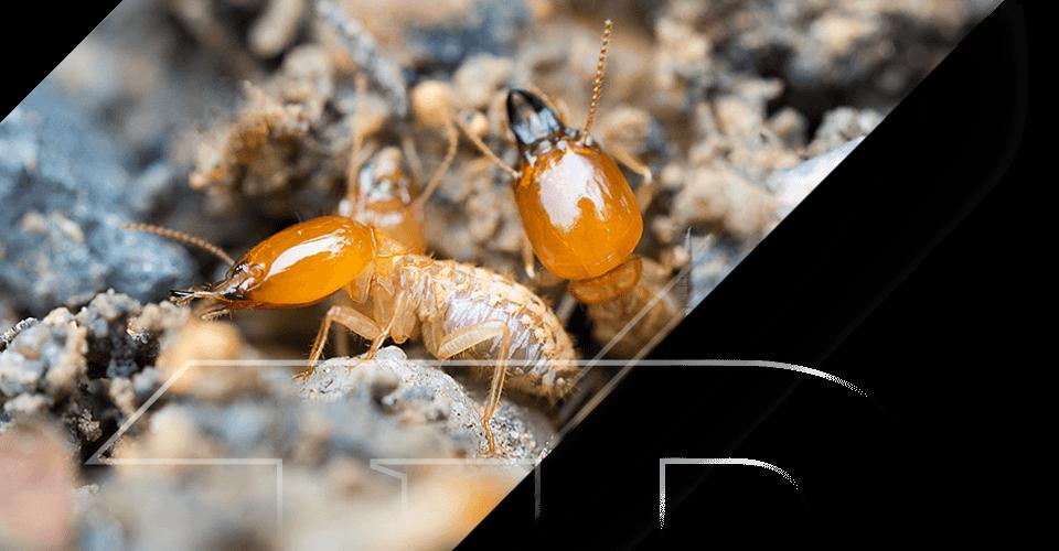 Termite Barriers Kingscliff